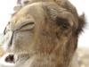 0-kamel