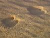 2-kamelspuren