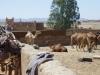 kamelstall