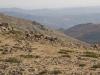 Rückweg mit Wildpferden